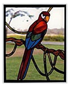 CKE-83 Parrot (Stained Glass Full Size Patterns)